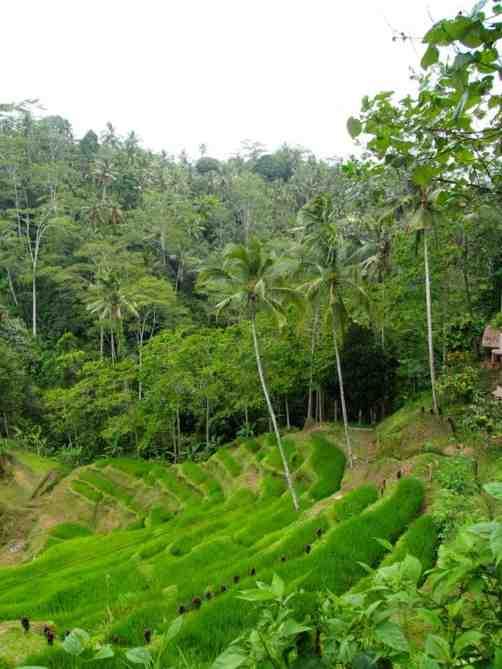 Où séjourner à Bali pour visiter?