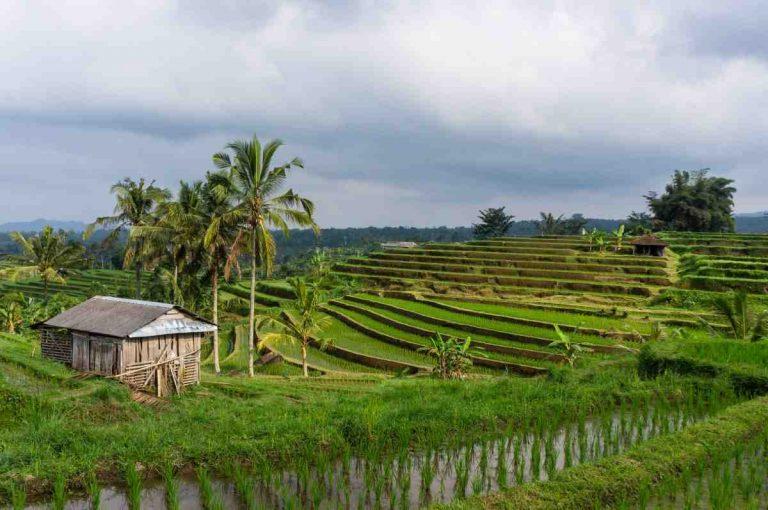 Quel circuit à Bali ?
