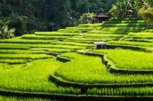 Quel temps à Bali au mois d'août ?