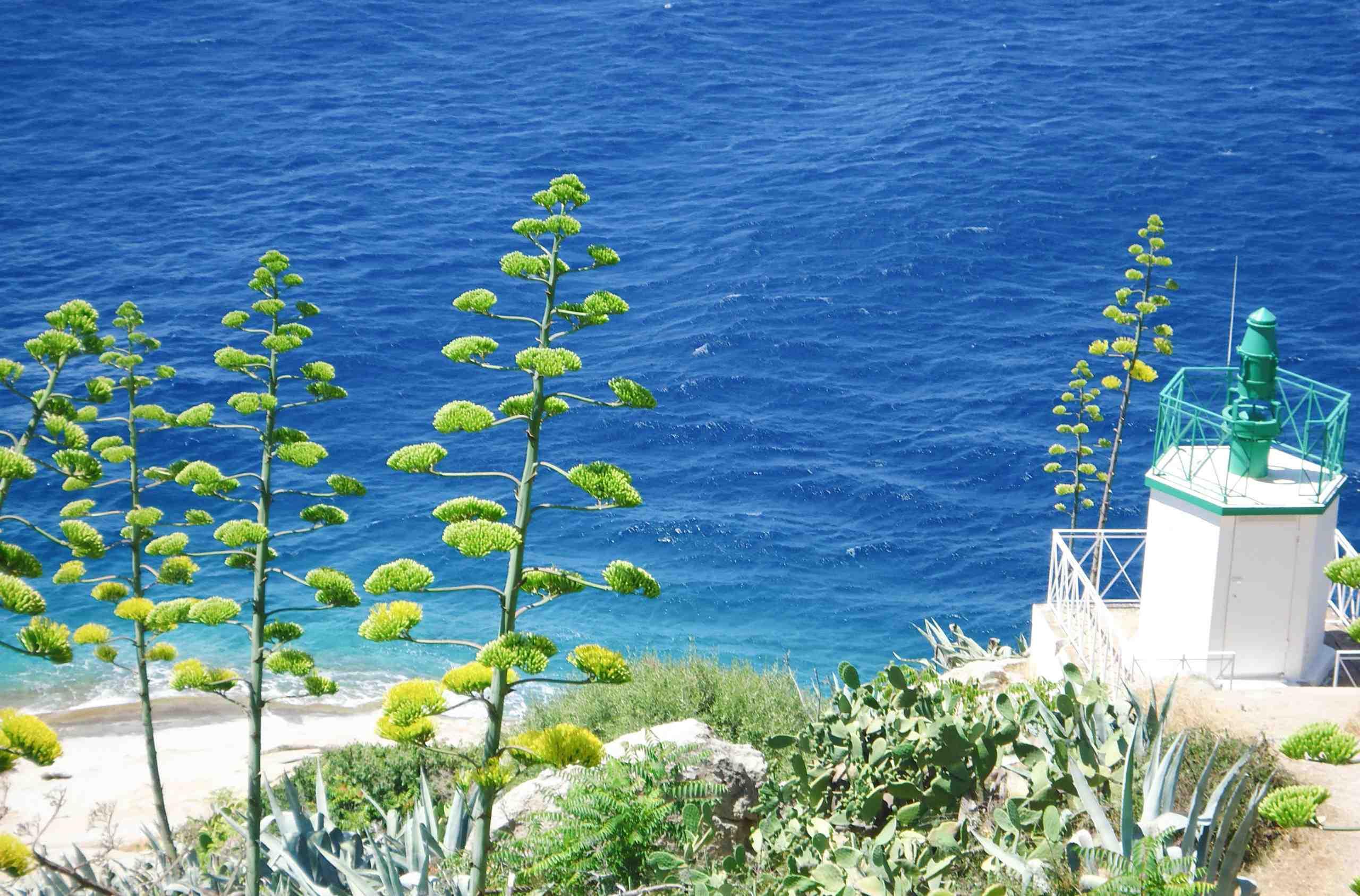 Quelle est la plus belle partie de la Corse?